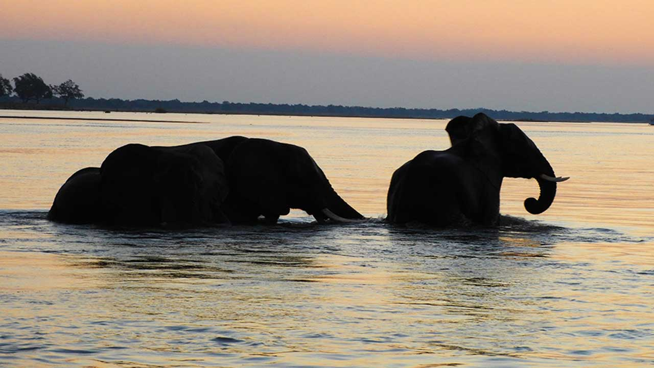elephants zambia